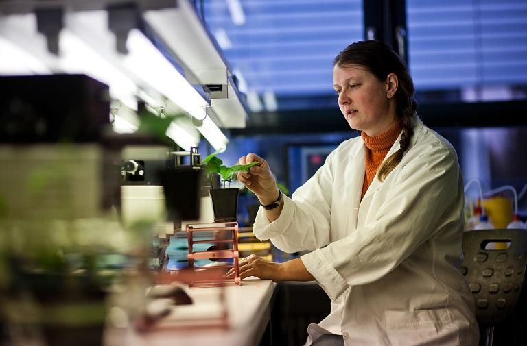 Frau sitzt an Schreibtisch und untersucht Pflanze